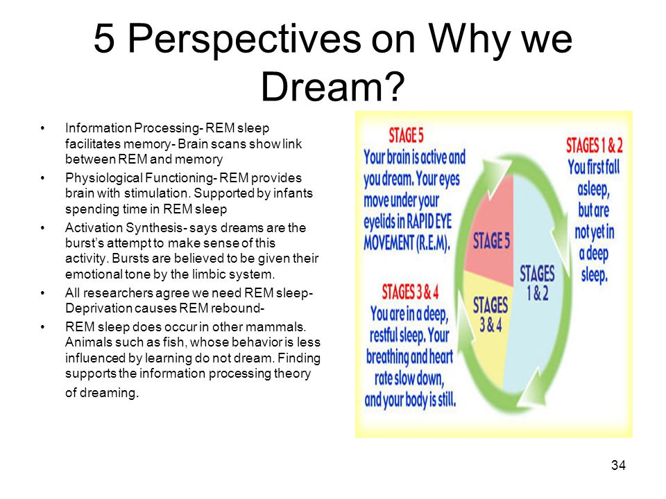 information processing dream theory A dream is a succession of had a simple dream theory: during the mental recombination may contribute to maintaining an optimal information processing.