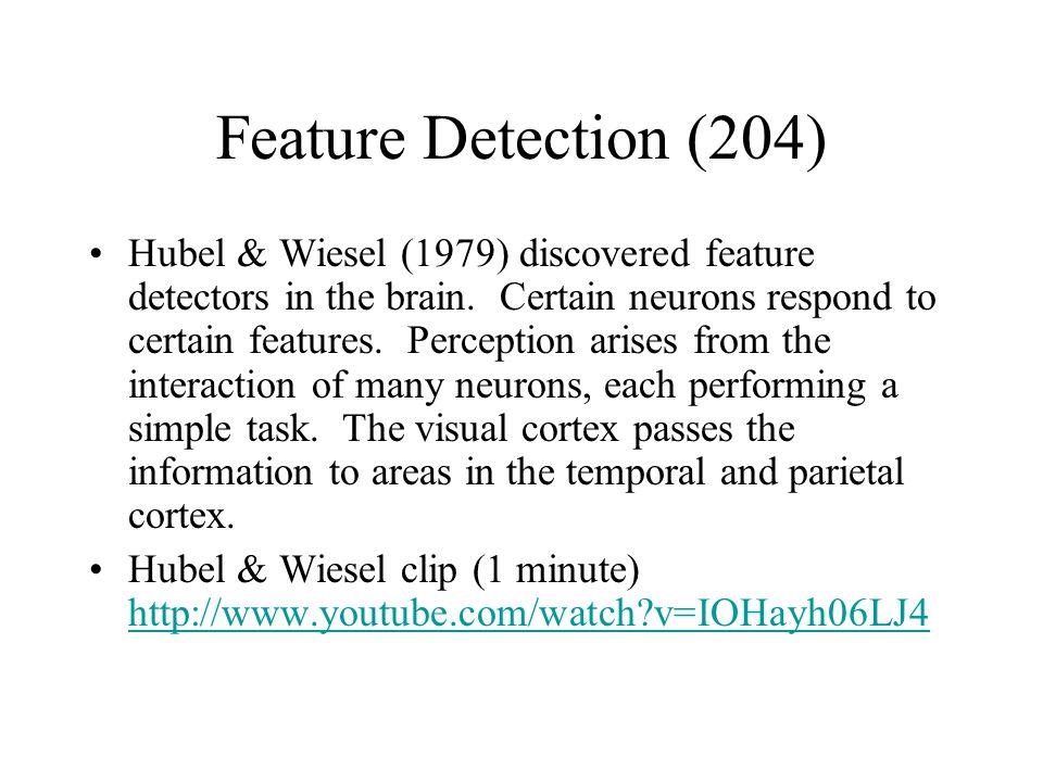the discovery of the connection between visual perception and neural activity by hubel and wiesel (a term that hubel and wiesel properly  the question of the link between mental experience and neural activity is a  feature pairs for visual perception.