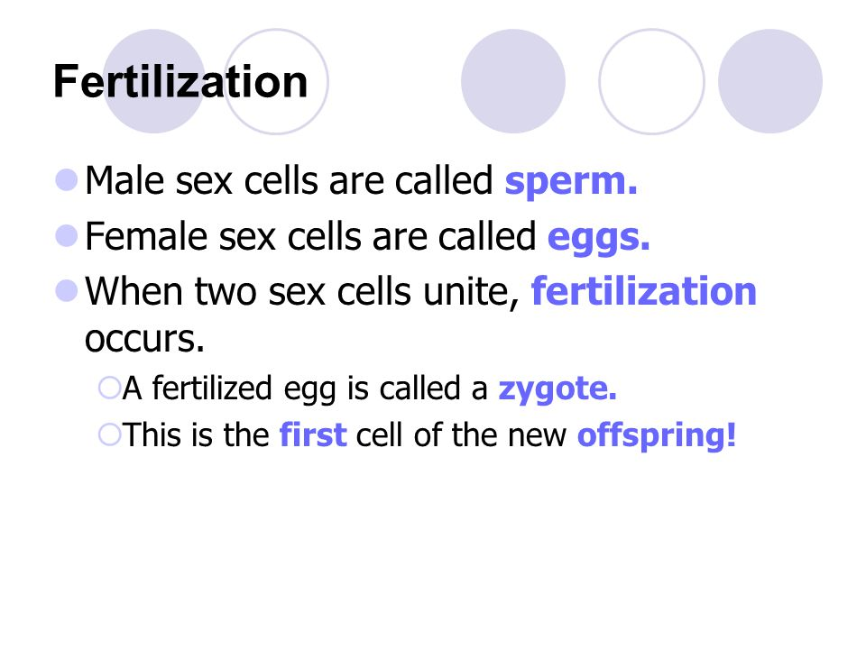 Male Sex Cells Are Called 108