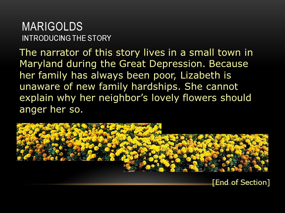 the marigolds lizabeth Lizabeth, the tomboyish main character, narrator and protagonist, tells this story from her childhood the leader of her group of friends, lizabeth takes part in throwing stones at miss lottie's flowerbed of marigolds.
