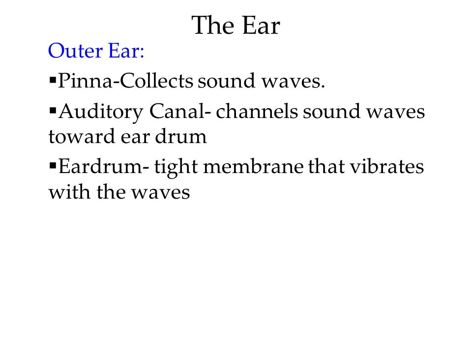 The Ear Outer Ear: Pinna-Collects sound waves.