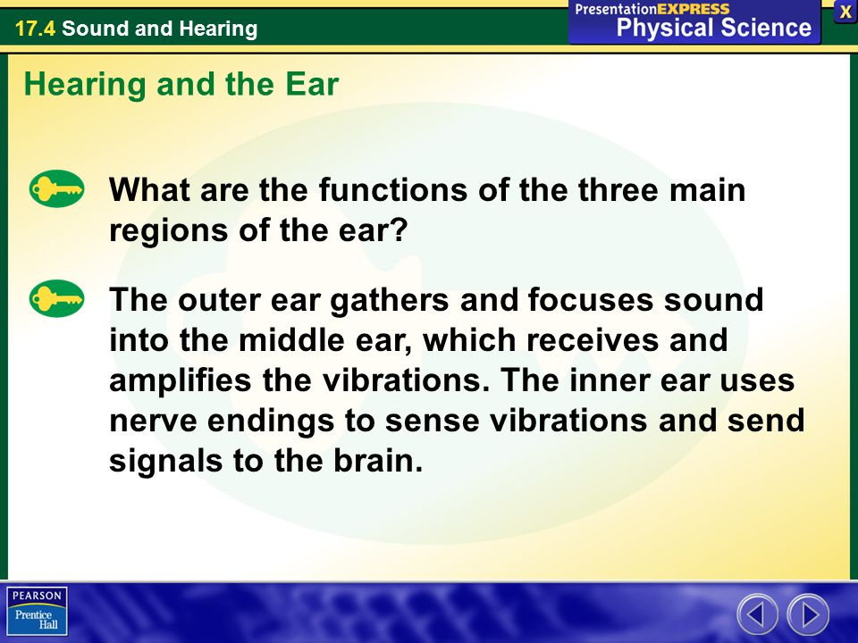 Hearing and the Ear What are the functions of the three main regions of the ear