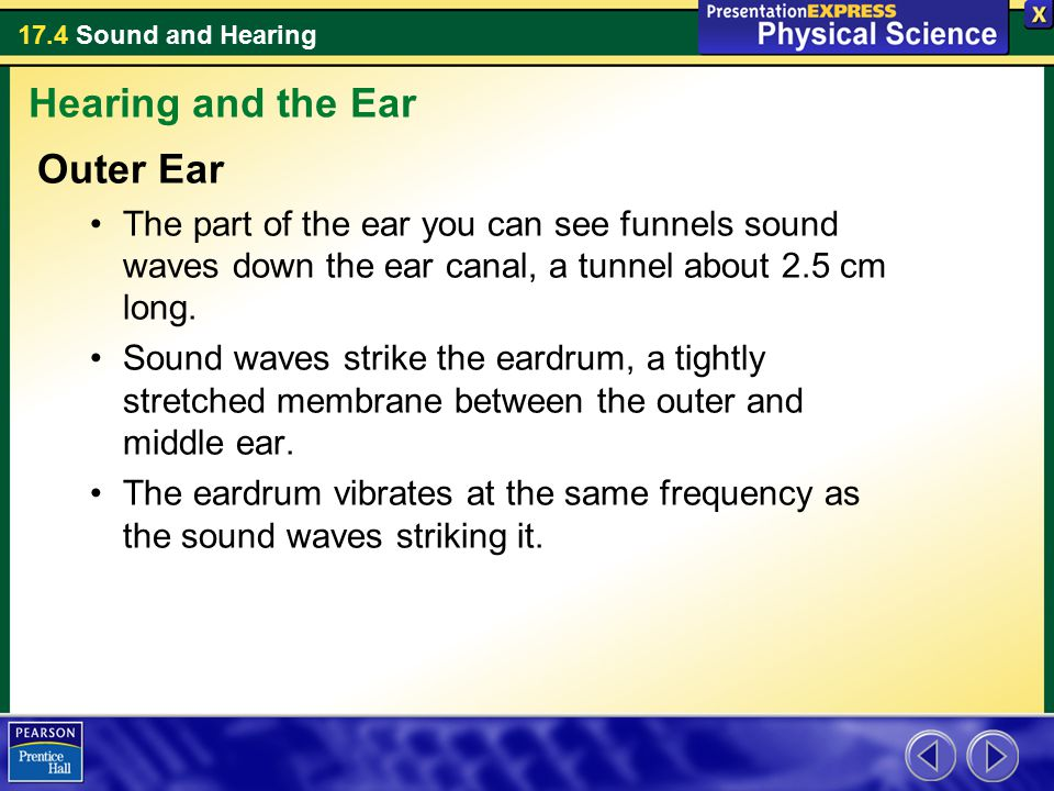 Hearing and the Ear Outer Ear