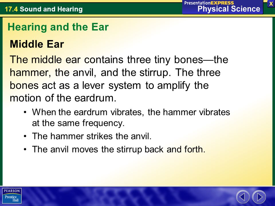 Hearing and the Ear Middle Ear