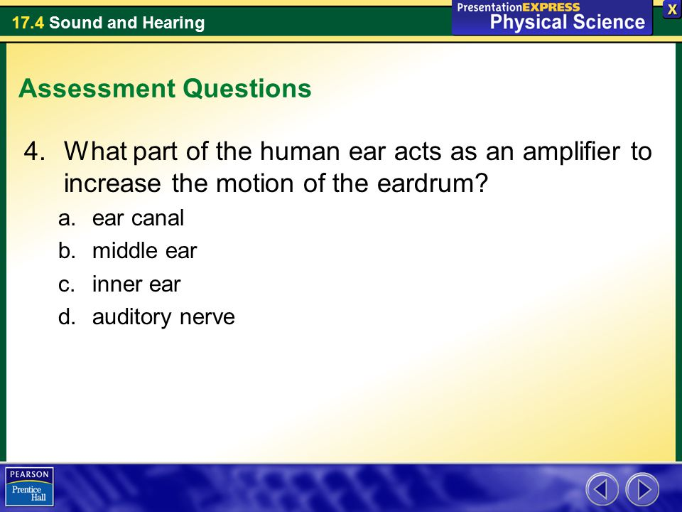Assessment Questions What part of the human ear acts as an amplifier to increase the motion of the eardrum