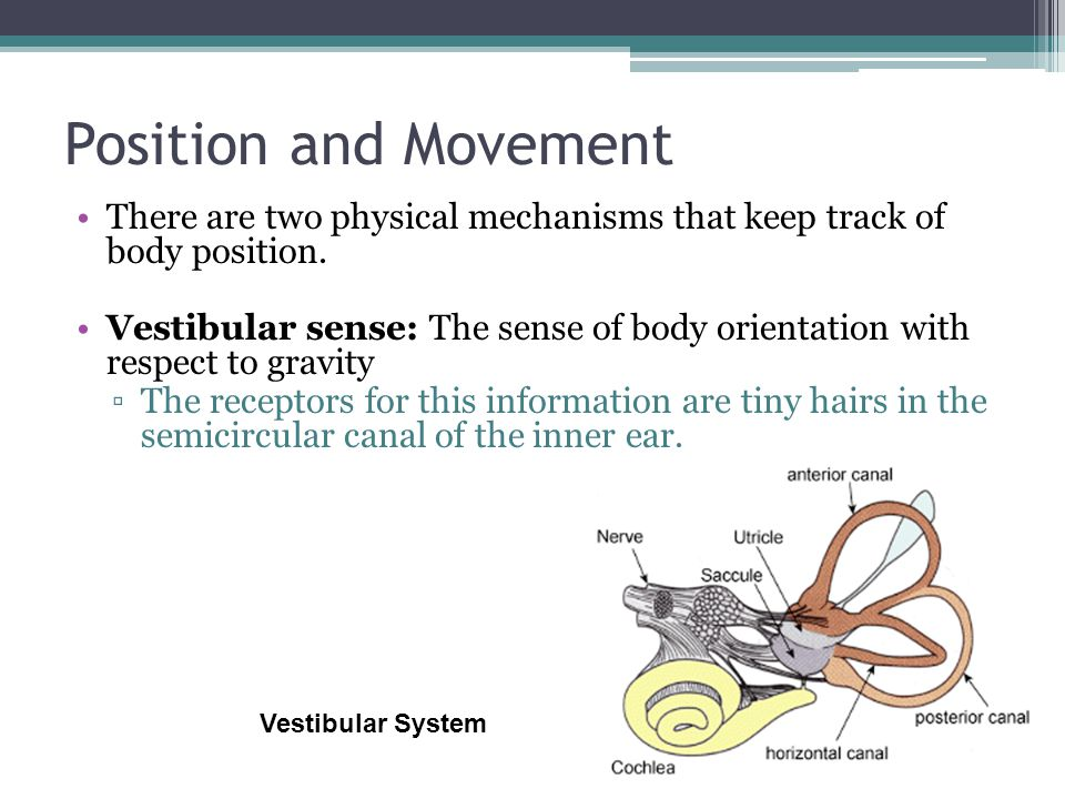 Movement perception