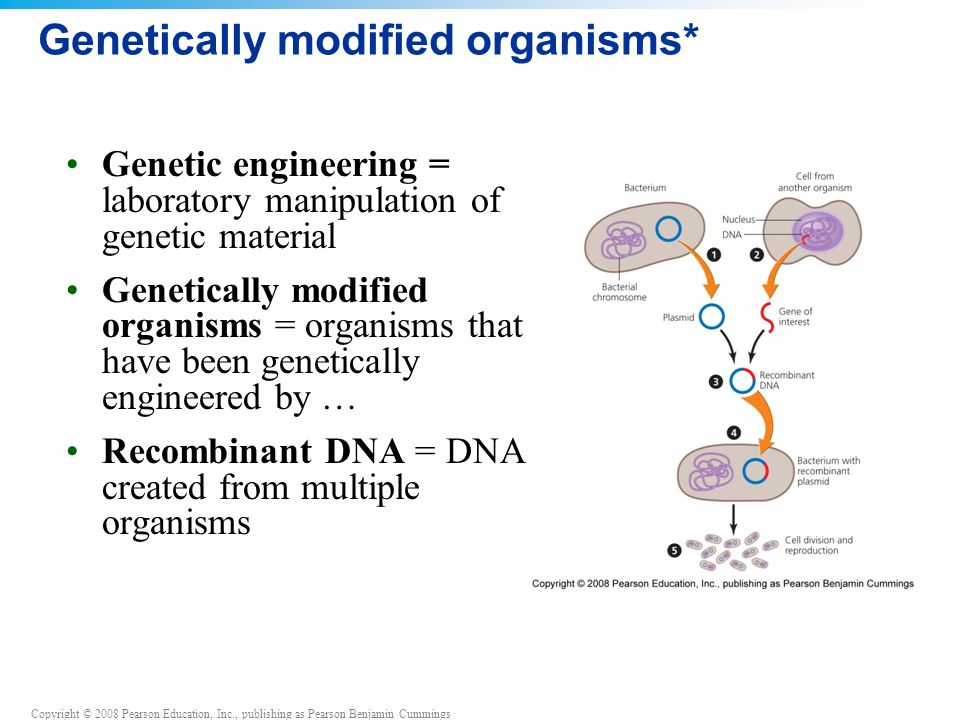 the flaws and failure of genetically modified organisms gmo Animals and genetic engineering - unlimited cruelty nevertheless, many of the animals presently cloned are genetically modified stock (seamark, 2003).