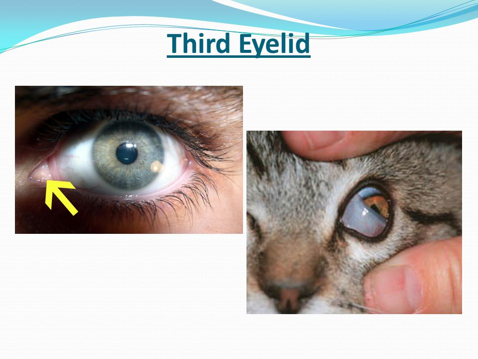 Evidence for evolution ppt download for What fish has eyelids
