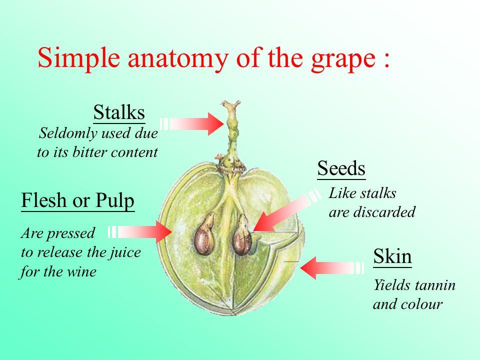 Anatomy of a grape vine 3671602 - follow4more.info