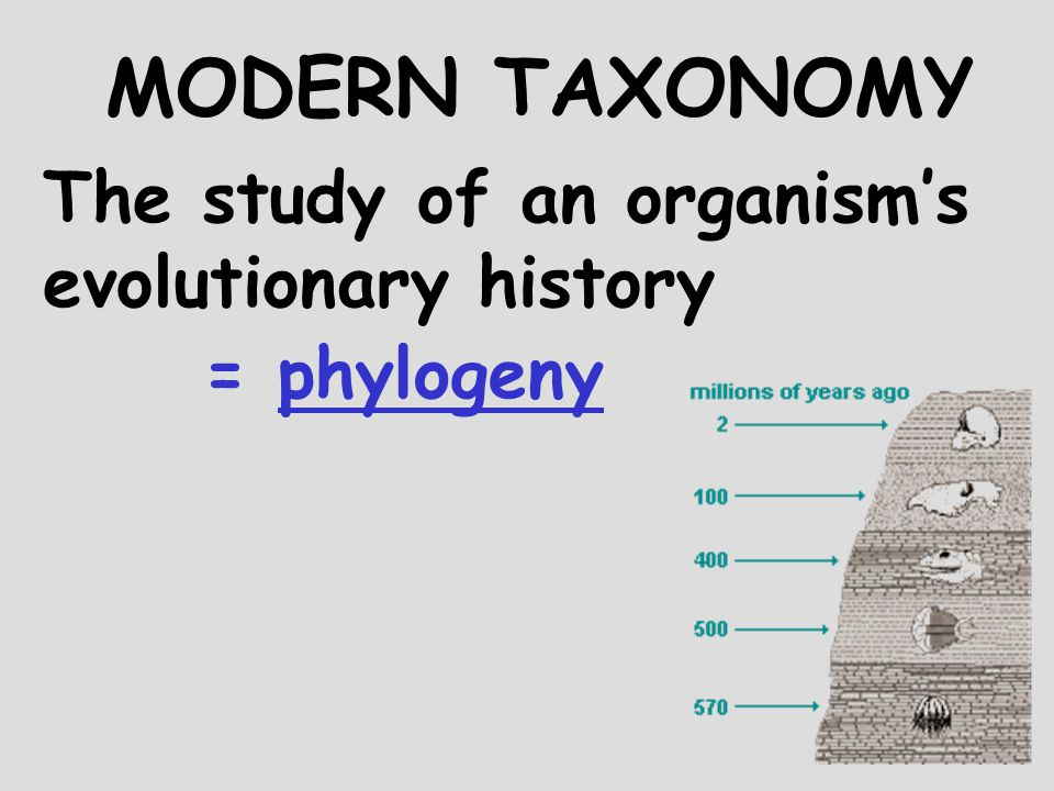 the history of modern classification Earliest classification systems grouped organisms as to whether they were beneficial or harmful the second ancient classification system recognized 5.