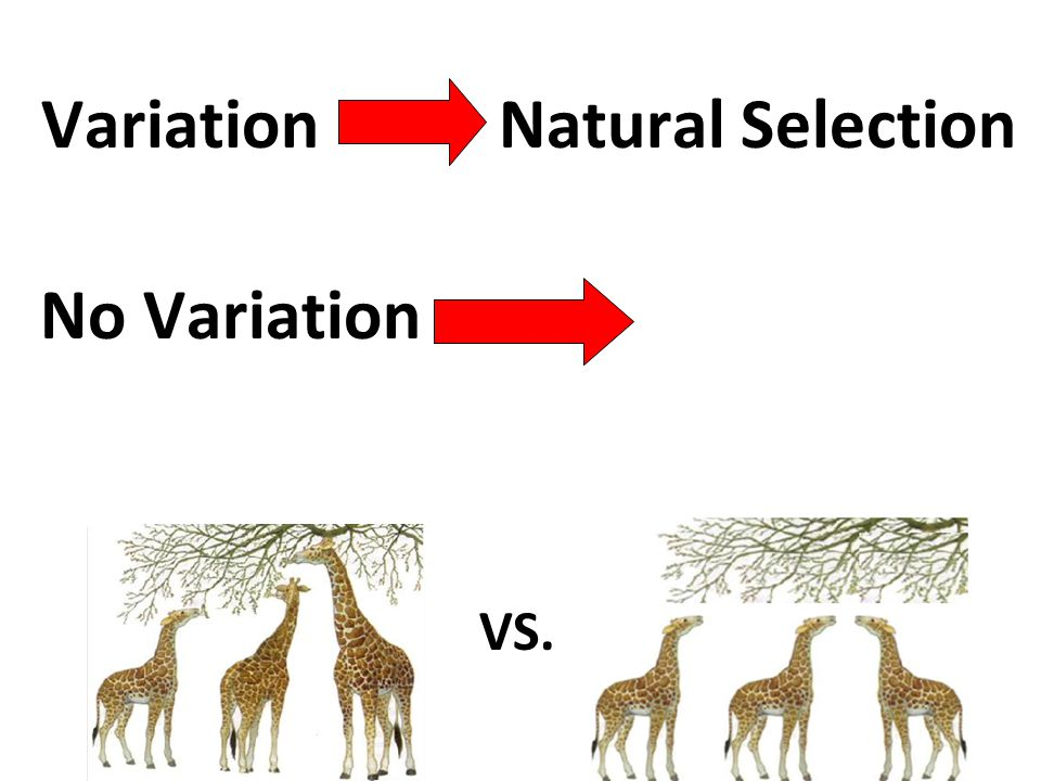 Variation Natural Selection Definition