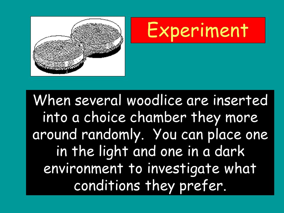 an experiment documenting the behavior of woodlice in different environments Start studying applied behavior analysis  during the different conditions of an experiment  in additional behavior that brings the environment to a condition.