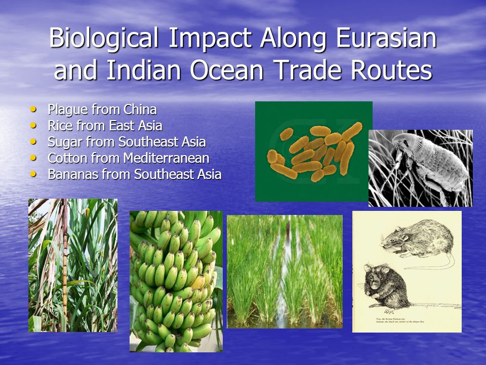 Impacts of the indian ocean trade system