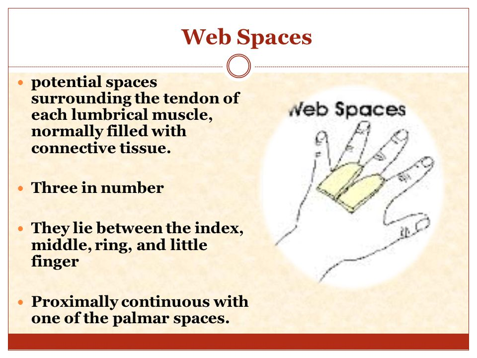 Web space anatomy