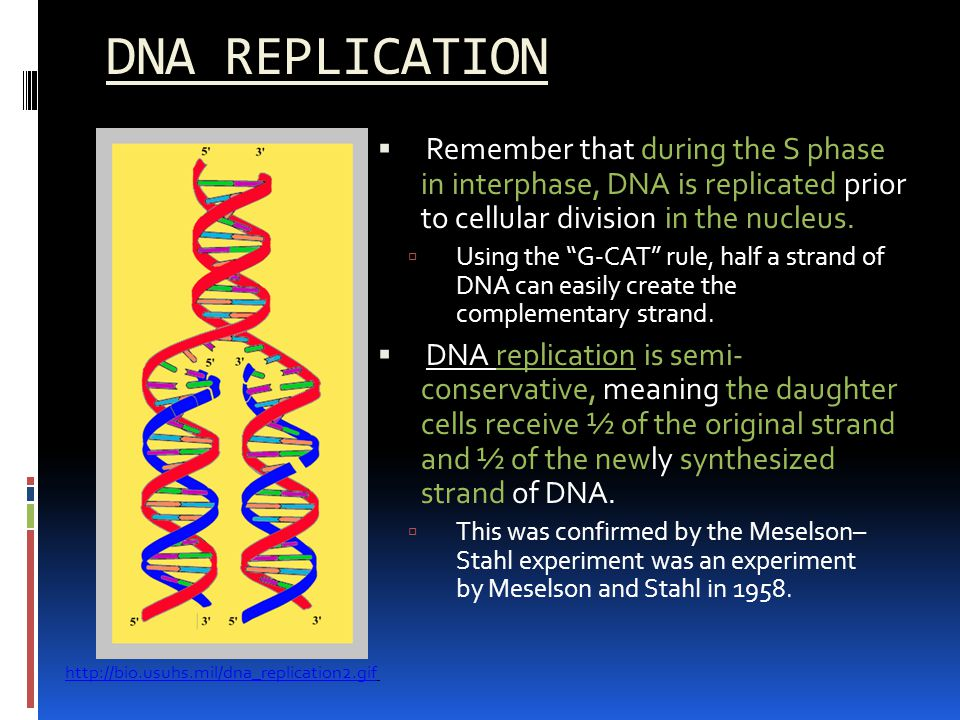 synthesise dna Synthesis of rna exhibits several features that are synonymous with dna replication rna synthesis requires accurate and efficient initiation, elongation proceeds in the 5' → 3' direction (ie the polymerase moves along the template strand of dna in the 3' → 5' direction), and rna synthesis requires distinct and accurate termination.