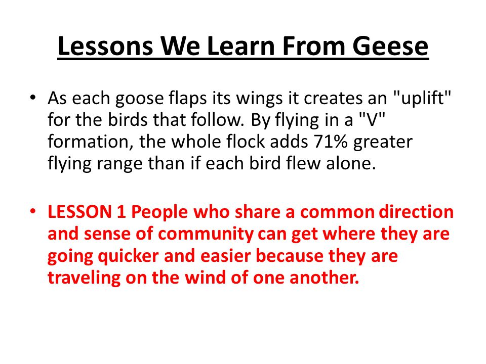 Lessons We Learn From Geese