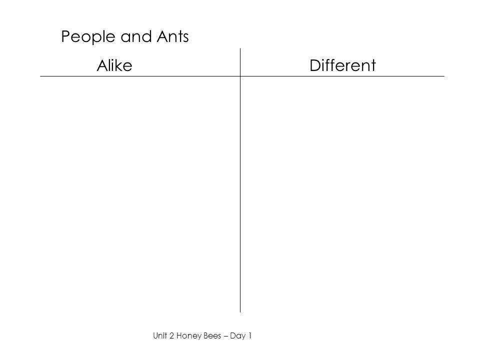 People and Ants Alike Different Unit 2 Honey Bees – Day 1