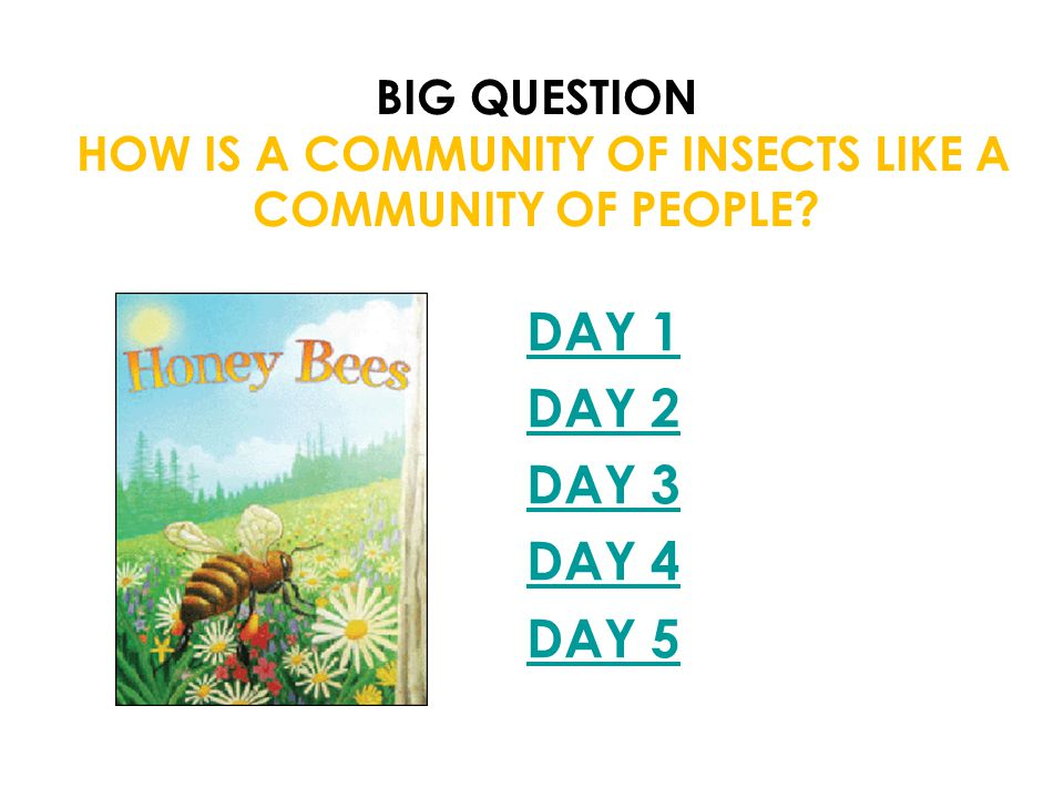 Big Question How is a community of insects like a community of people