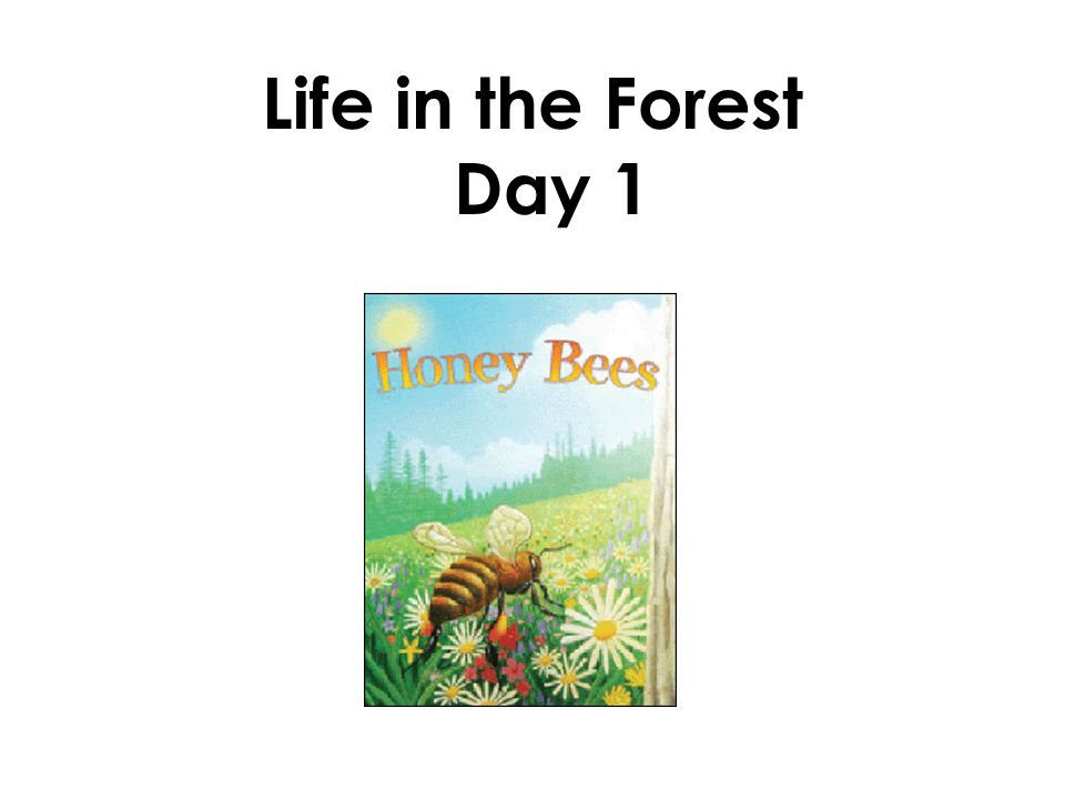 Life in the Forest Day 1