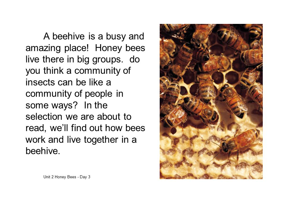 A beehive is a busy and amazing place