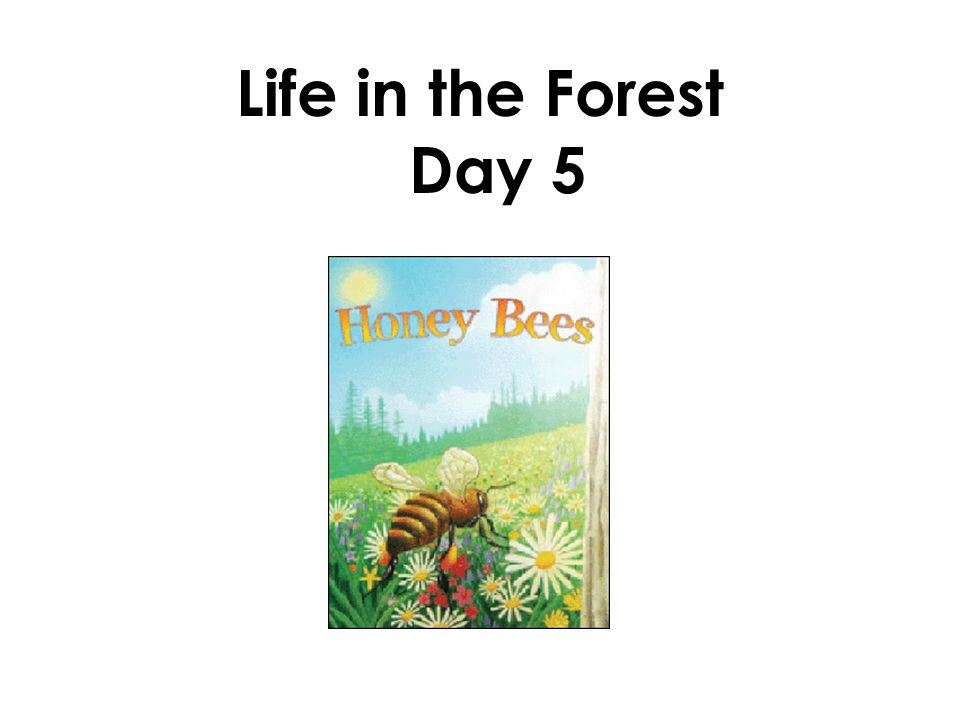 Life in the Forest Day 5