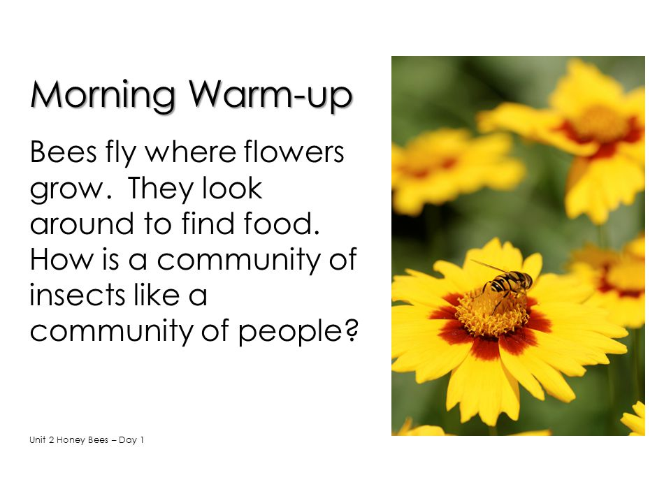 Morning Warm-up Bees fly where flowers grow. They look around to find food. How is a community of insects like a community of people