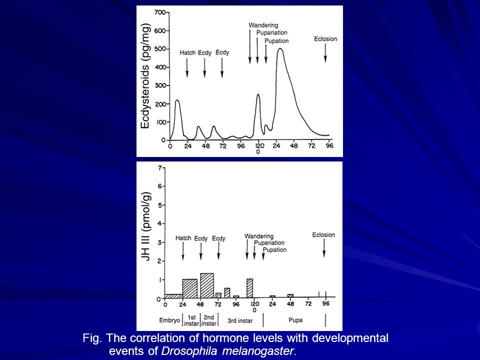 ecdysteroid juvenile hormone
