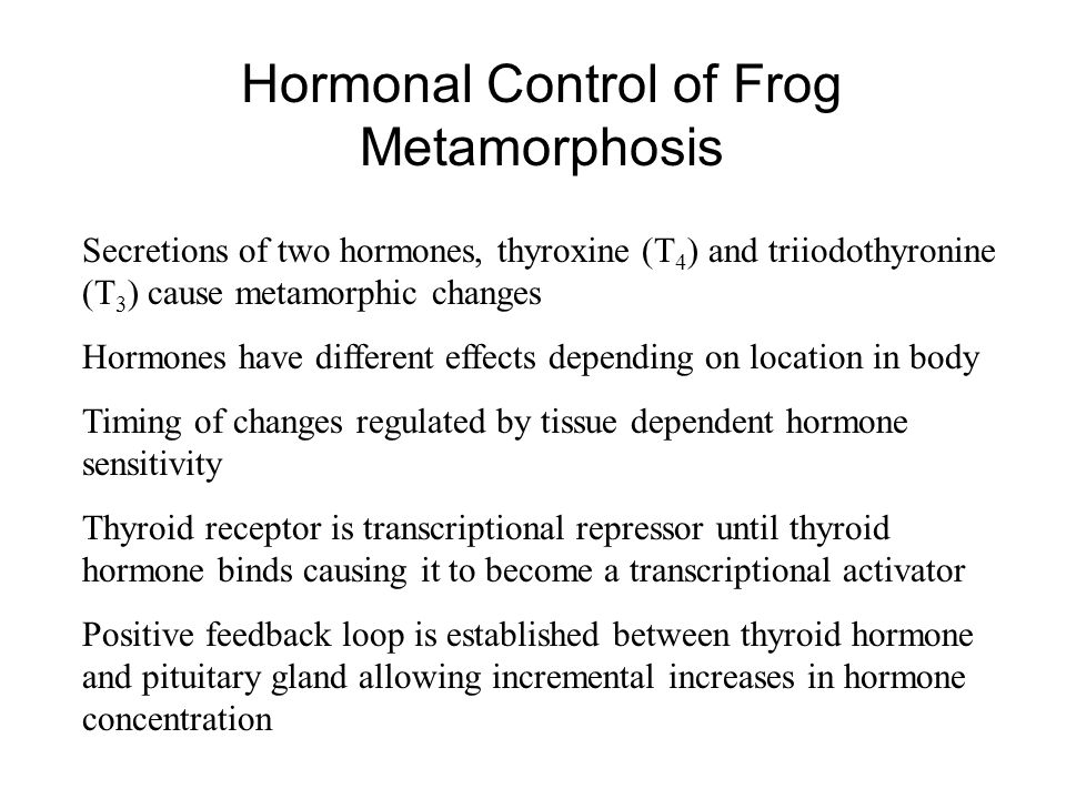 Hormonal Control of Frog Metamorphosis