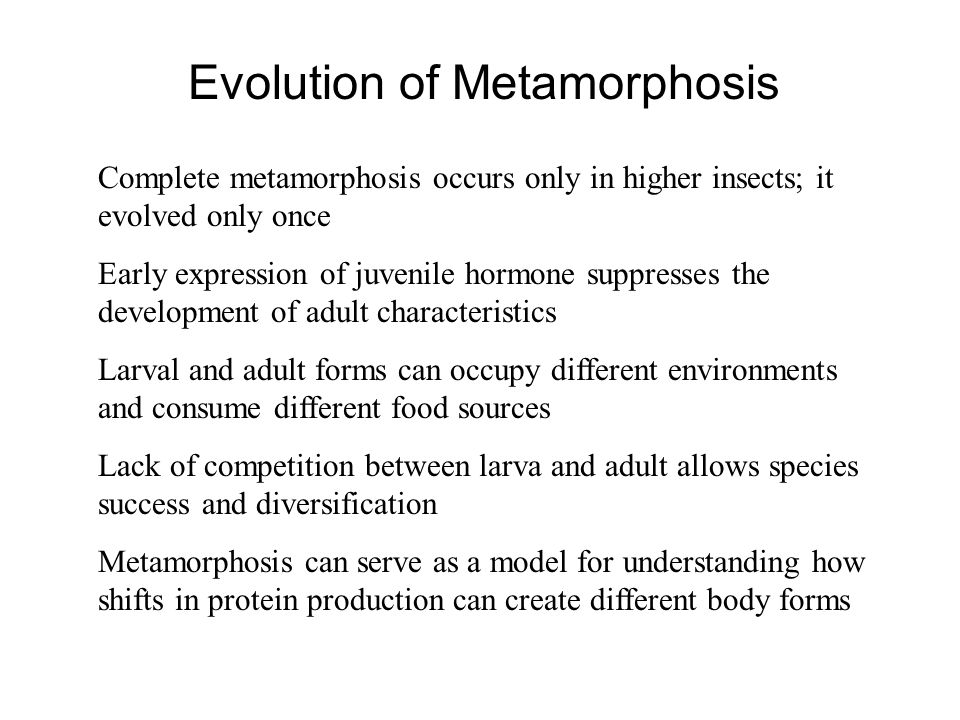 Evolution of Metamorphosis