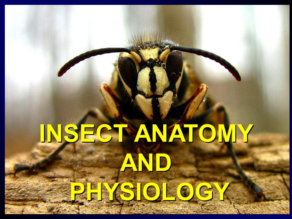 Insect Anatomy And Physiology Ppt Video Online Download