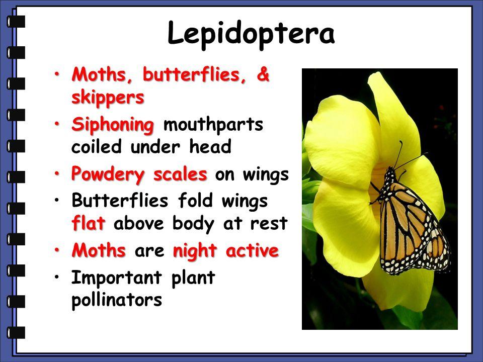 Lepidoptera Moths, butterflies, & skippers