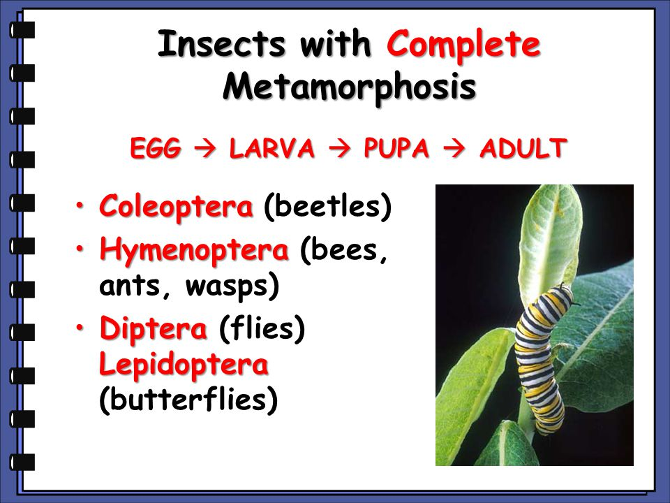Insects with Complete Metamorphosis