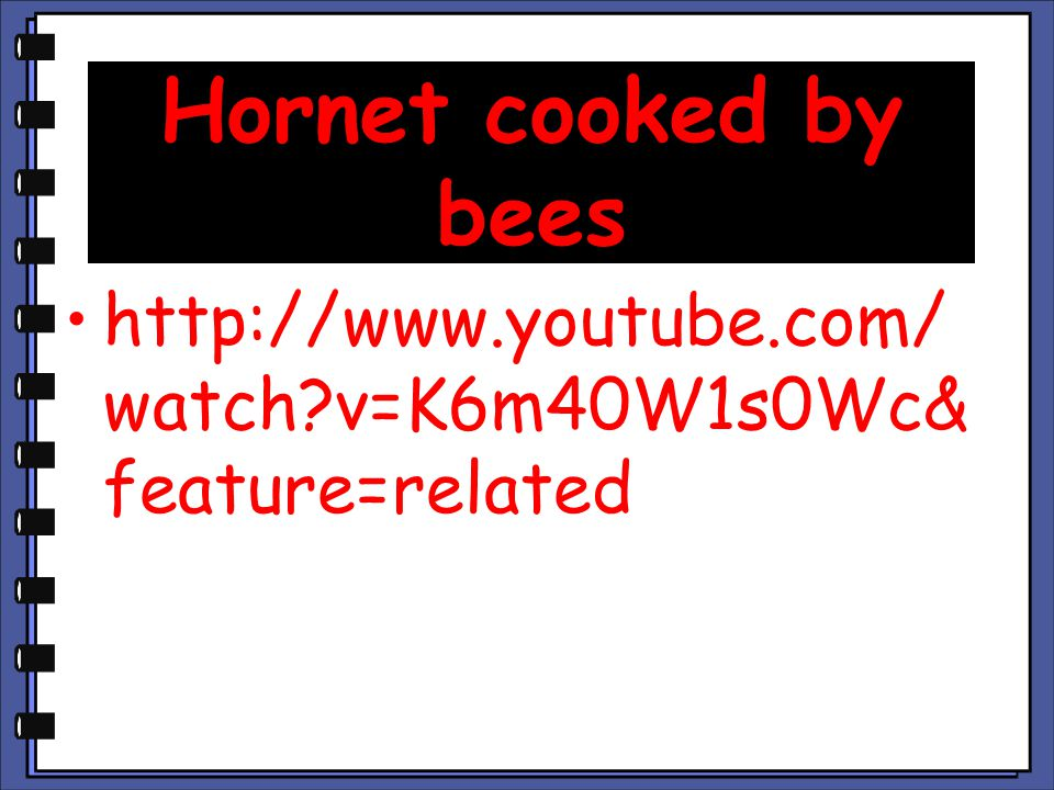Hornet cooked by bees http://www.youtube.com/watch v=K6m40W1s0Wc&feature=related