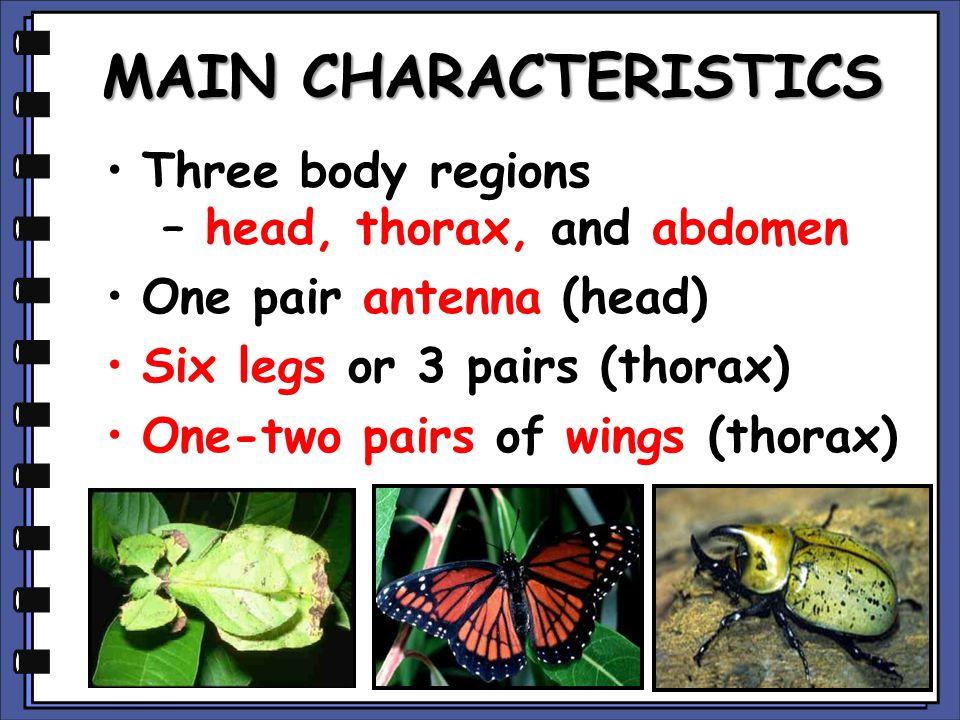 MAIN CHARACTERISTICS Three body regions – head, thorax, and abdomen