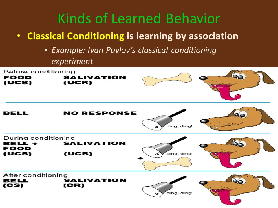 classical conditioning experiment In the field of psychology, classical conditioning is a type of learning that has had a major influence on behaviorism classical conditioning was discovered by ivan pavlov, a russian physiologist, better known for the work he did with dogs often referred to as pavlov's dogs.