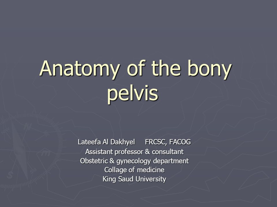 Anatomy of the bony pelvis - ppt video online download