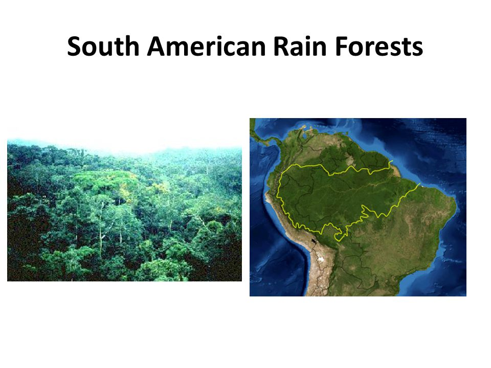 South American Rain Forests