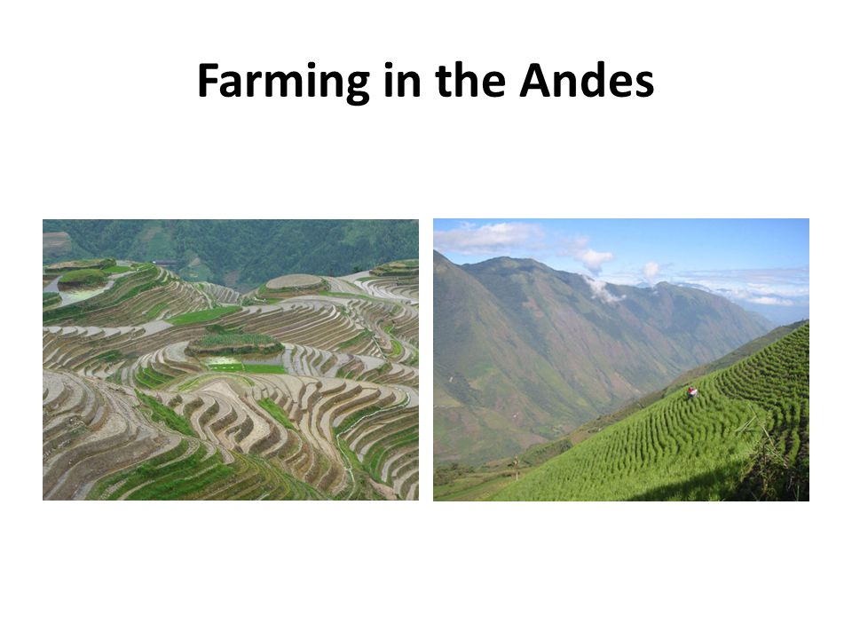 Farming in the Andes