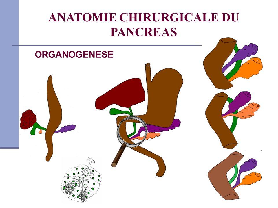 ANATOMIE CHIRURGICALE DU PANCREAS