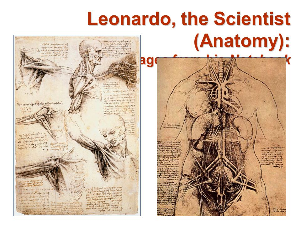Leonardo, the Scientist (Anatomy): Pages from his Notebook