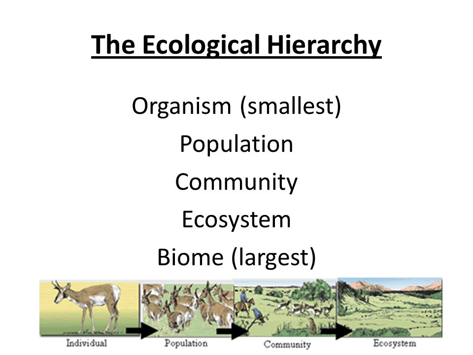 Ecological Hierarchy How We Organize Our World From