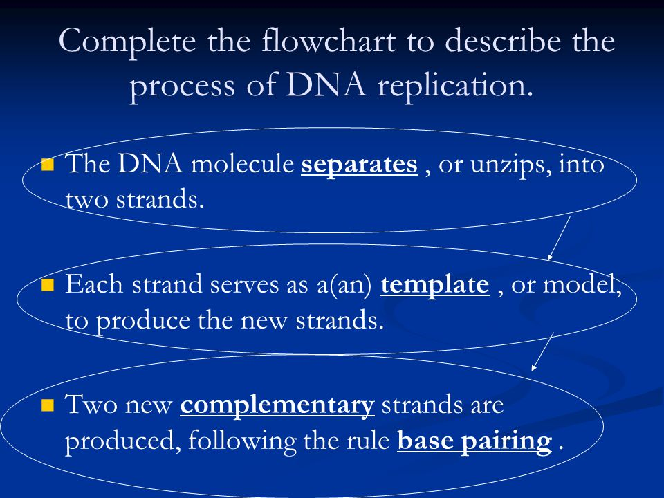 explain how dna serves as its own template during replication - chromosomes and dna replication ppt download