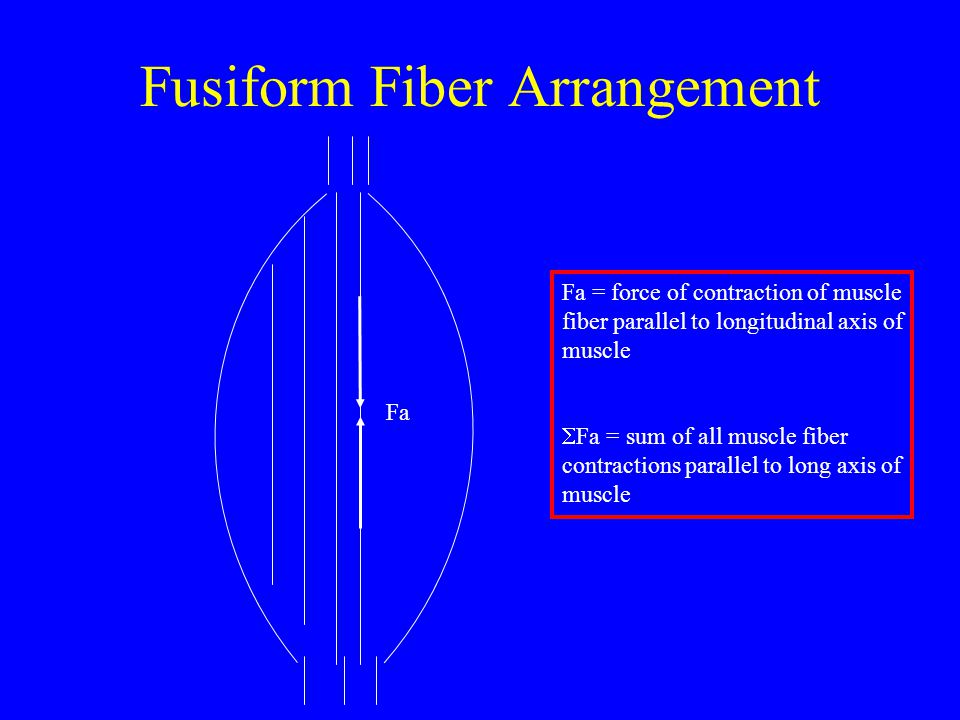 muli fibre arrangement Definition of multi-fibre arrangement in the financial dictionary - by free online  english dictionary and encyclopedia what is multi-fibre arrangement.