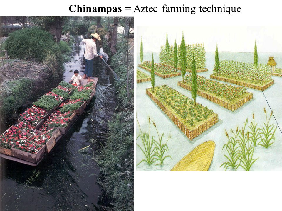 Chinampas = Aztec farming technique