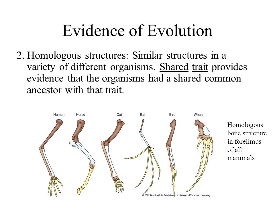 the evolution of forelimbs essay Evolution: evolution, theory in biology postulating that the various types of plants, animals like the forelimbs of turtles, horses, humans, birds.