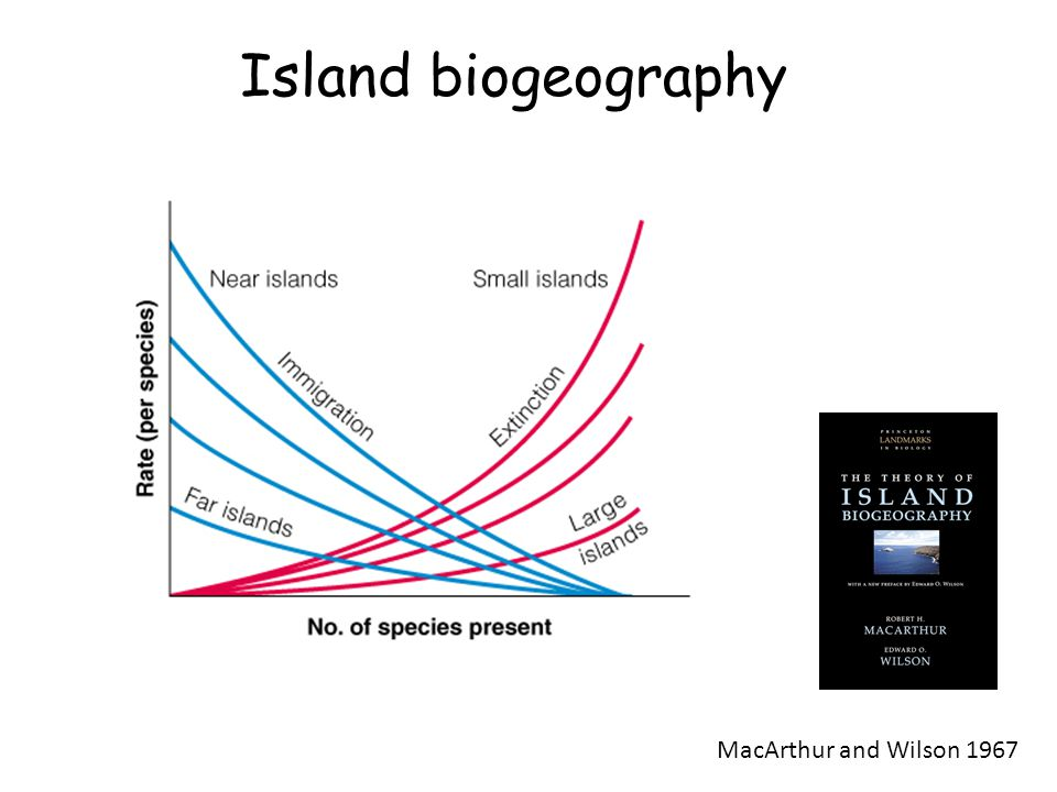 theory of island biogeography Abstract macarthur and wilsonхs theory of island biogeography (tib) is among  the most well-known process-based explanations for the distribution of species.