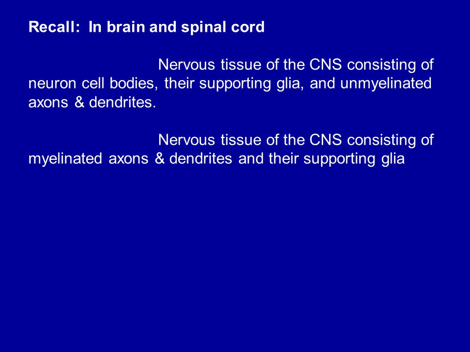 Recall: In brain and spinal cord
