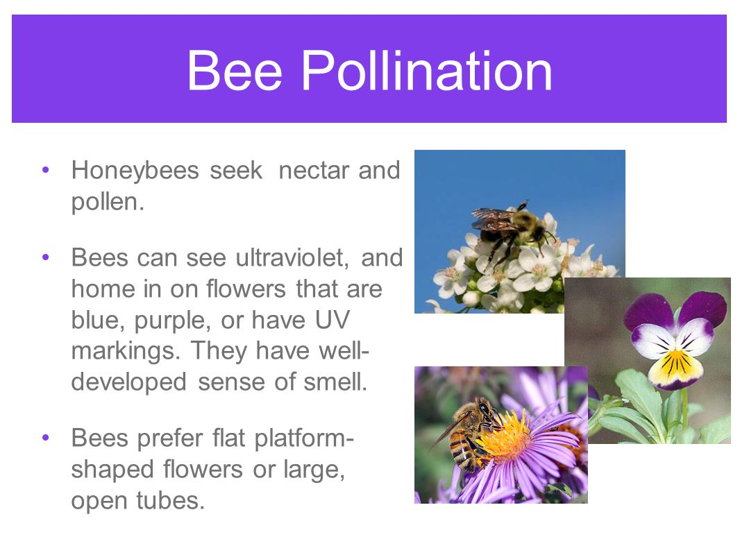 Pollination and dispersal ppt download 4 bee pollination izmirmasajfo Images