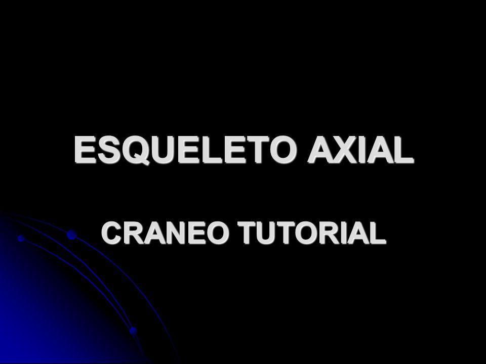 ESQUELETO AXIAL CRANEO TUTORIAL