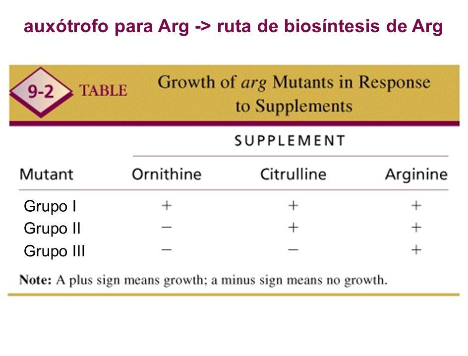auxótrofo para Arg -> ruta de biosíntesis de Arg